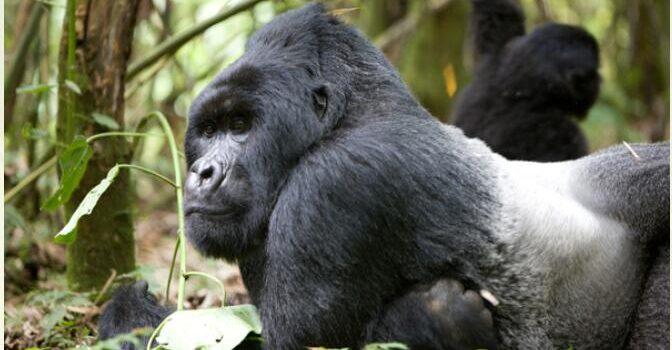 Uganda Travel Package